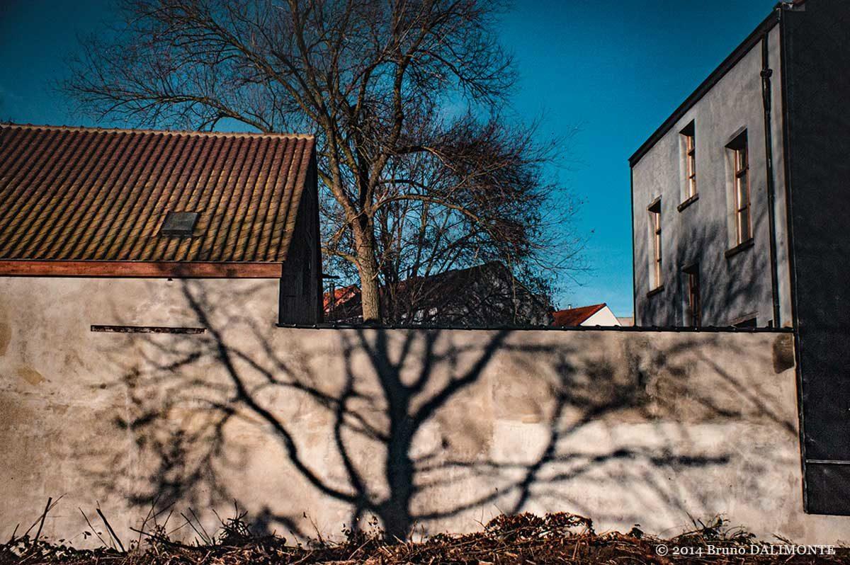 Bruxelles, Jette ombre d'un arbre sur un mur qui semble prolonger un autre arbre.