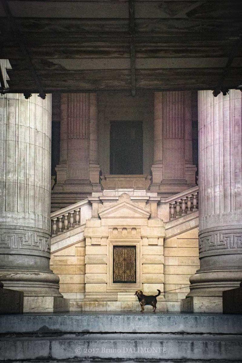 photographie du palais de justice de Bruxelles avec un chien isolé dont l