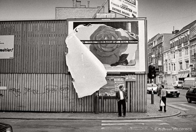 photographie poétique sur l'éclosion d'une rose en ville à Bruxelles © 1994 Bruno D'Alimonte
