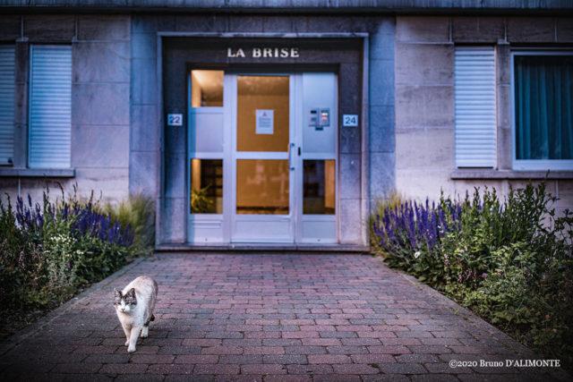 Photographie d'un chat débonnaire à Schaerbeek avenue Wahis devant la résidence La Brise © 2020 Bruno D'Alimonte