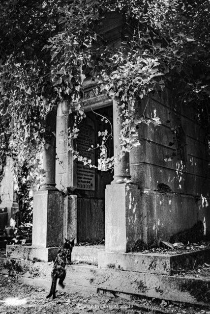 photographie issue de la collection Brussels'Eyes de Bruno D'Alimonte intitulée Immortel du Dieweg © août 2020